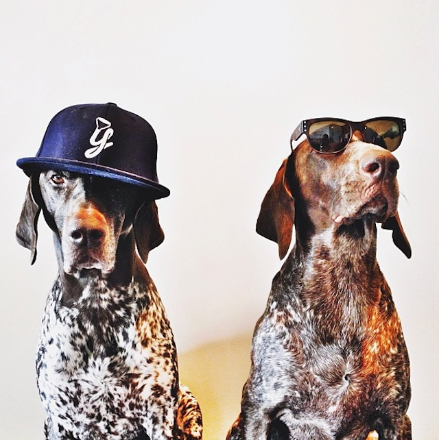 Gus_and_Travis_Dogs_10