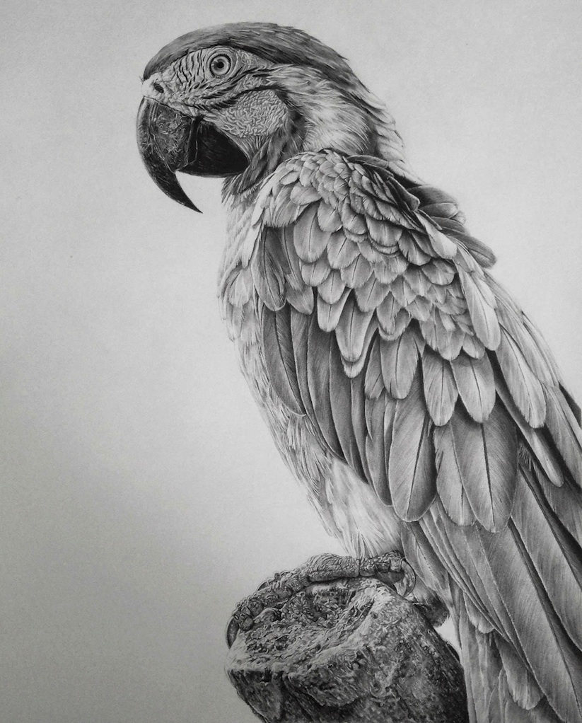 Hyperrealistic_Pencil_Drawings_By_Monica_Lee_2014_08