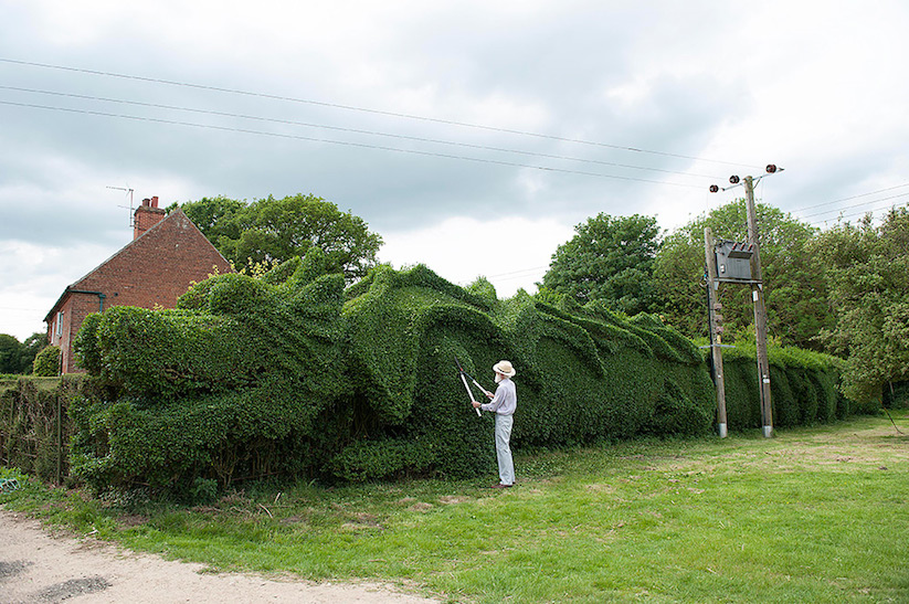 JohnBrooker_hedge_dragon_02