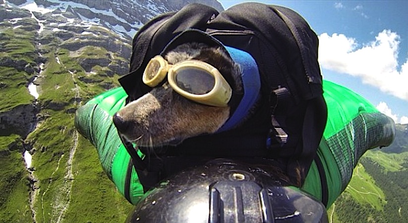 When_Dogs_Fly_Worlds_First_Wingsuit_BASE_Jumping_Dog_2014_01