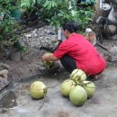 Preparing Coconut Juice