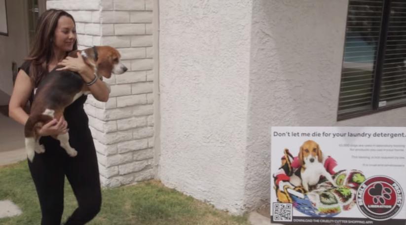 beagle_freedom_project_02