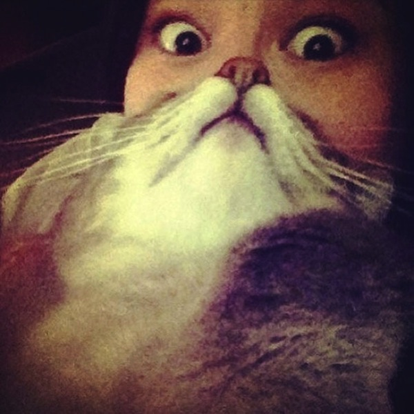 cat-beards_01