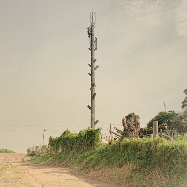 cellphone_tower_trees_04