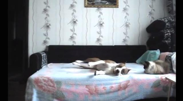 dog_home_alone_01