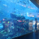 Aquarium in der Mall