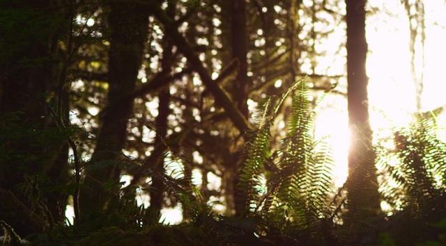 forest_ski_valhalla_02