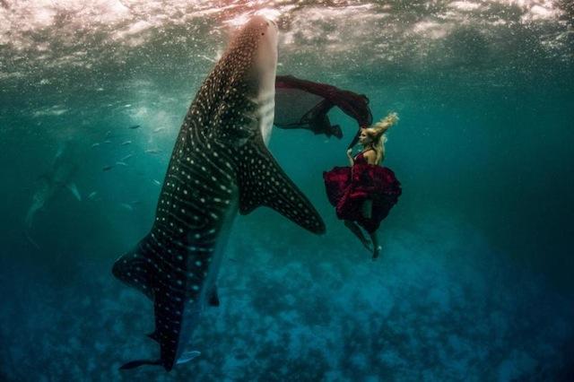kristian-schmidt-underwater-photography-shark-whale-chicquero-01