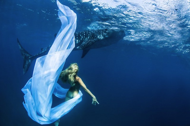kristian-schmidt-underwater-photography-shark-whale-chicquero-02