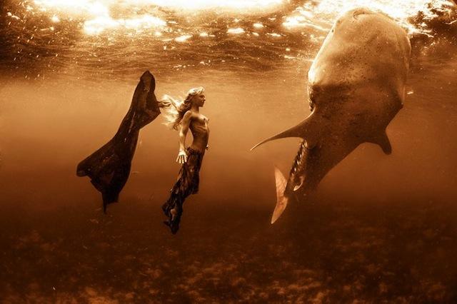 kristian-schmidt-underwater-photography-shark-whale-chicquero-03