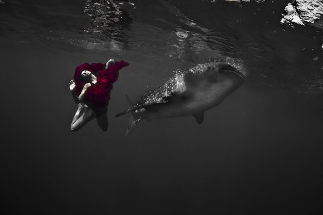 kristian-schmidt-underwater-photography-shark-whale-chicquero-04