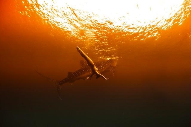 kristian-schmidt-underwater-photography-shark-whale-chicquero-05