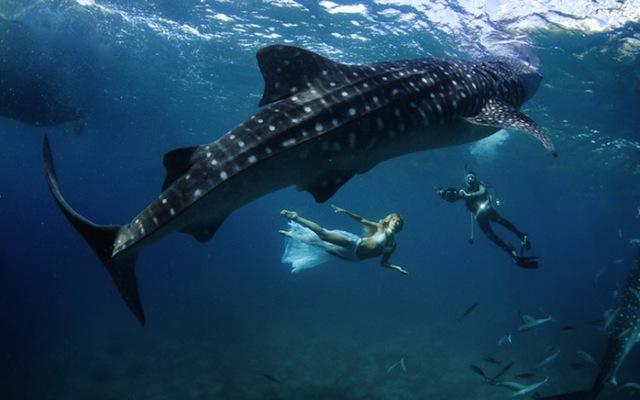 kristian-schmidt-underwater-photography-shark-whale-chicquero-07