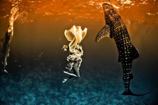 kristian-schmidt-underwater-photography-shark-whale-chicquero-08