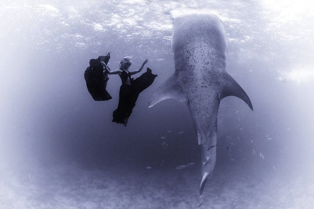 kristian-schmidt-underwater-photography-shark-whale-chicquero-09