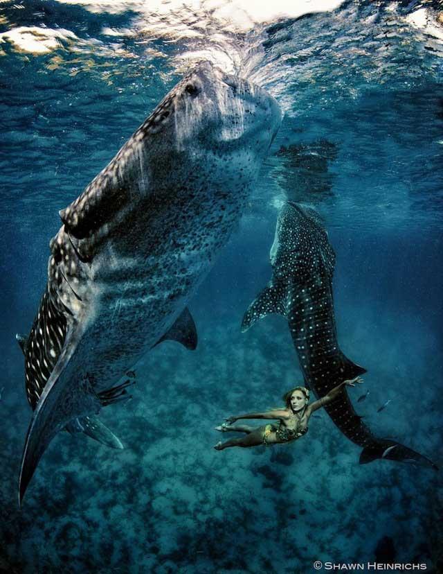 kristian-schmidt-underwater-photography-shark-whale-chicquero-13