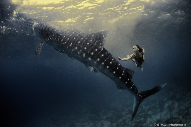 kristian-schmidt-underwater-photography-shark-whale-chicquero-14