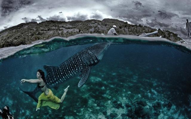 kristian-schmidt-underwater-photography-shark-whale-chicquero-15