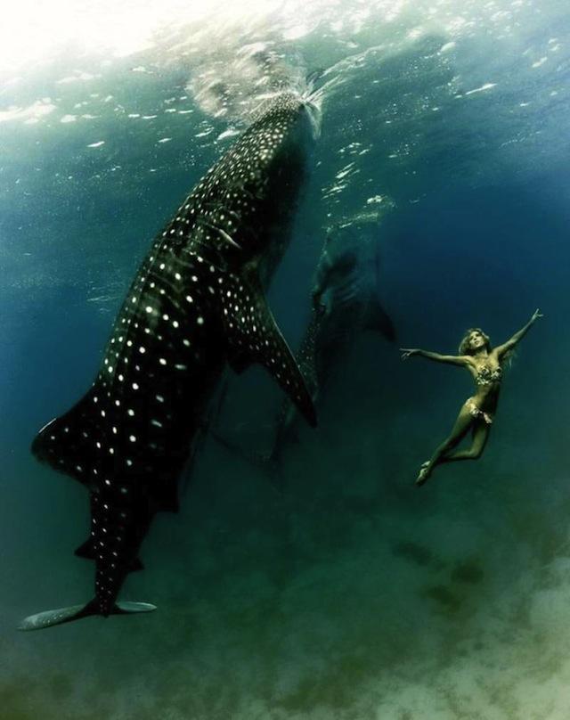 kristian-schmidt-underwater-photography-shark-whale-chicquero-16