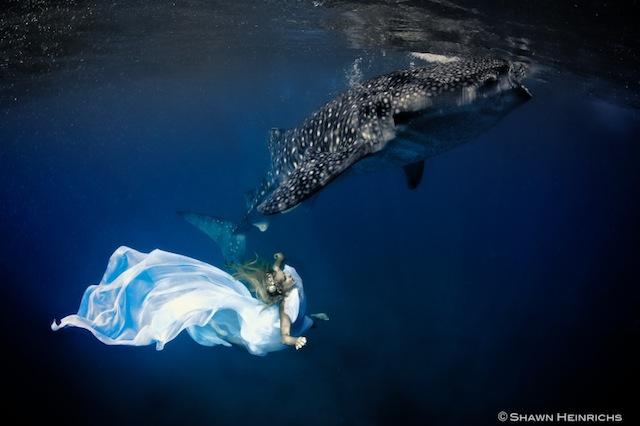 kristian-schmidt-underwater-photography-shark-whale-chicquero-17