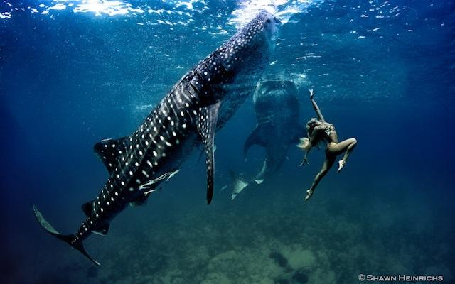kristian-schmidt-underwater-photography-shark-whale-chicquero-18
