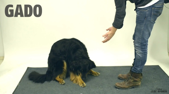 magic_for_dogs_03