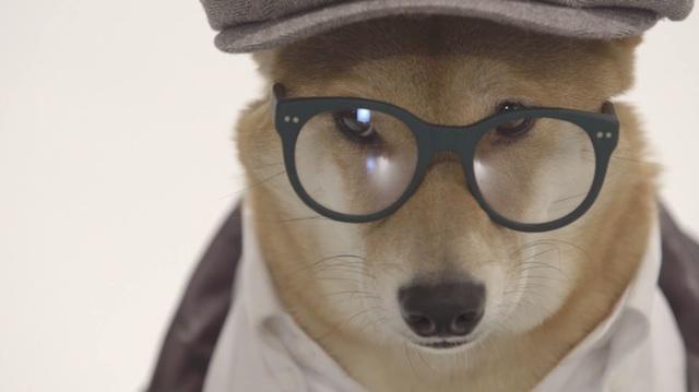 menswear_dog_portrtait_05