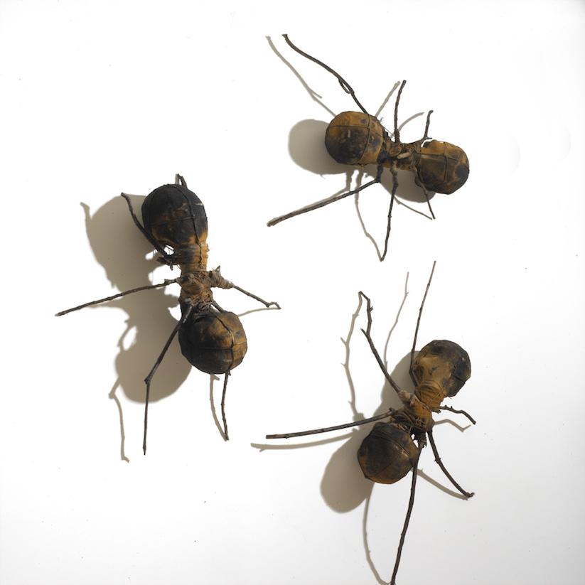 Hormigas 0009