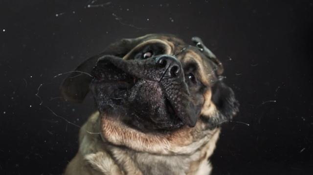 shake_dogs_hawthorne_02