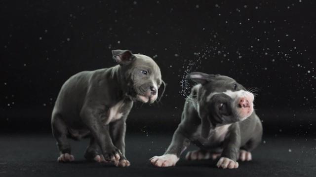 shake_dogs_hawthorne_03