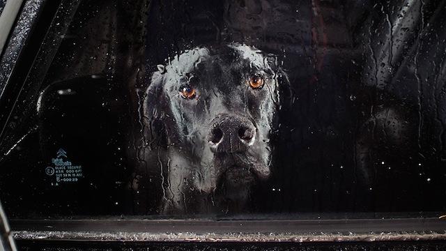 silence_dog_in_cars_00