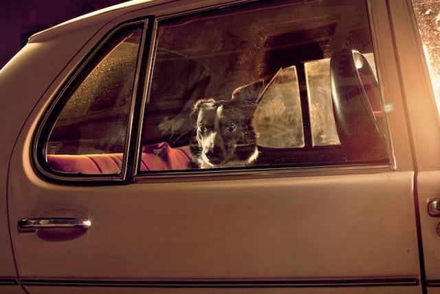 silence_dog_in_cars_01