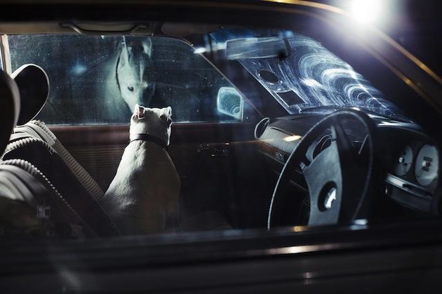 silence_dog_in_cars_02