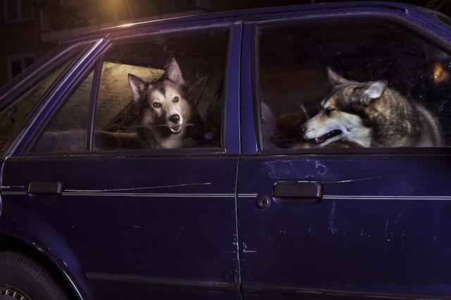 silence_dog_in_cars_03