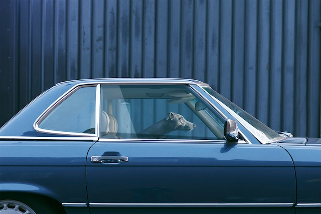 silence_dog_in_cars_04
