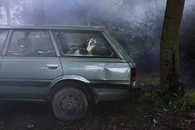 silence_dog_in_cars_06