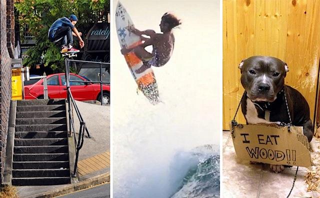 ska_surf_dog