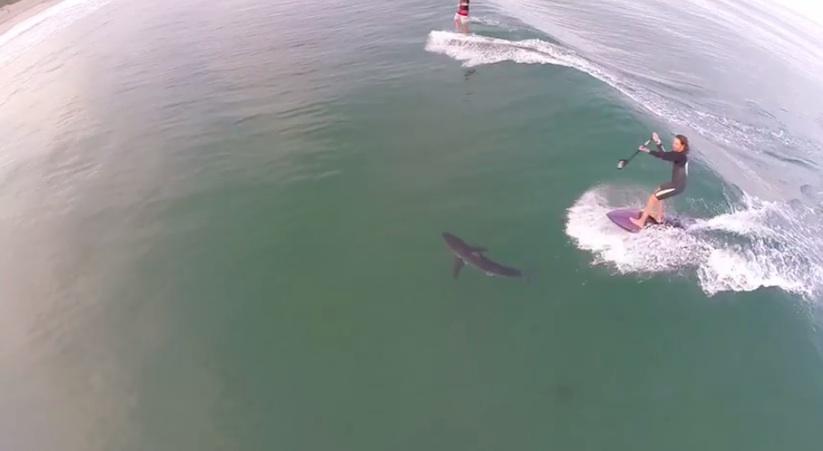 surfer_runs_over_a_shark
