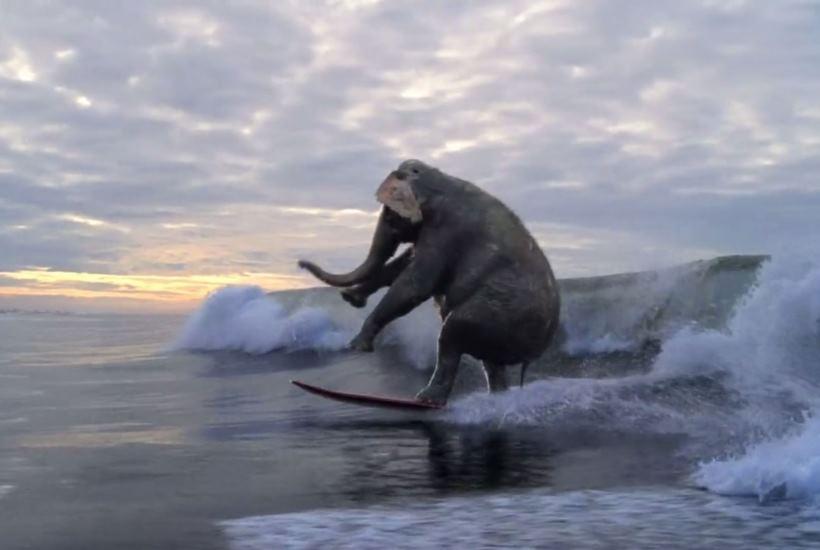 surfing animal 9