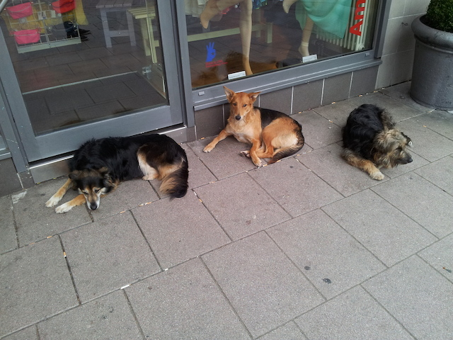 tumblr_dogs_berlin_1