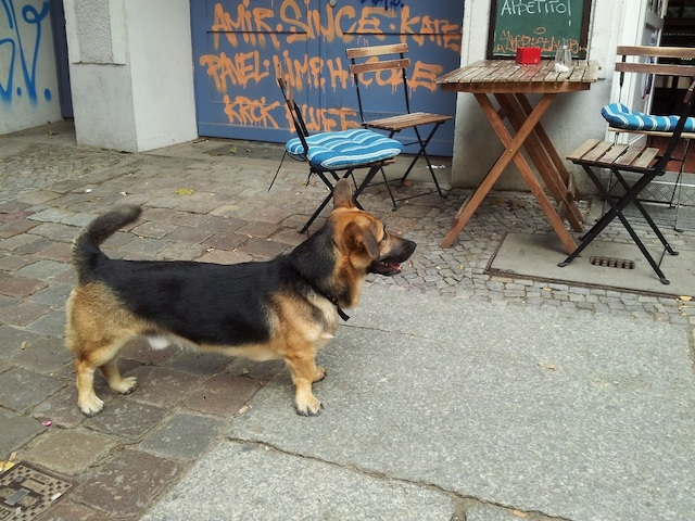 tumblr_dogs_berlin_10