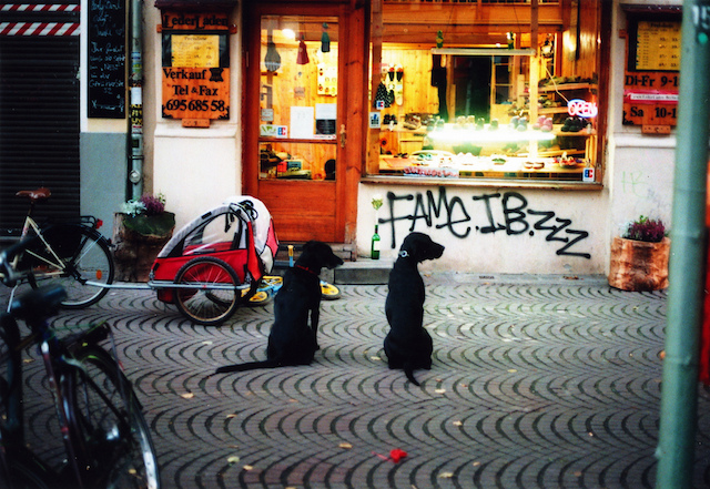 tumblr_dogs_berlin_3