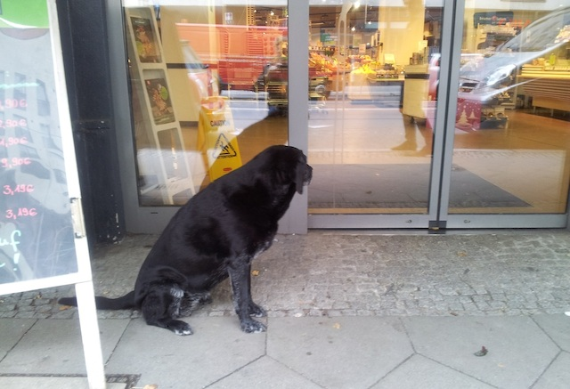 tumblr_dogs_berlin_6