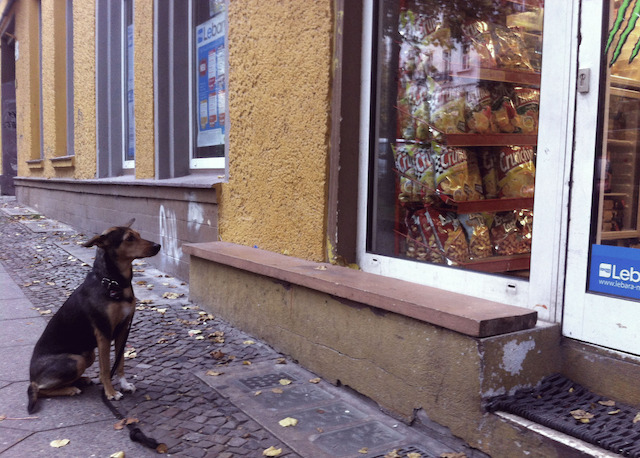 tumblr_dogs_berlin_7