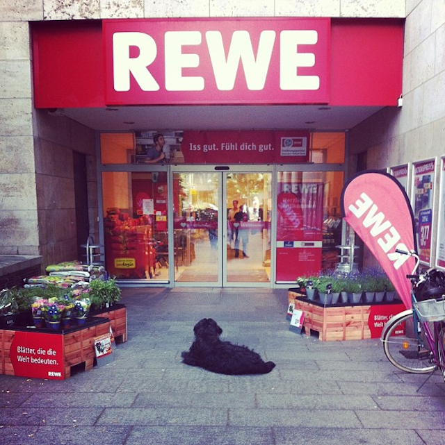 tumblr_dogs_berlin_8